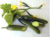 Cucumber Vera Parthenocarpie