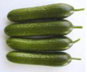 Cucumber Vincent Parthenocarpie