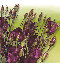 Cut flowers Lisianthus Russellianum F1 Eustoma
