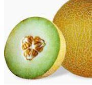 Melon Galia Galion 2