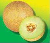 Melon Galia Galion 24