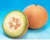 Melon Galia Galion 26