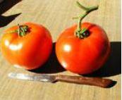 Tomato Beef Rino Impr