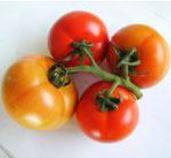 Tomato Beef Rino