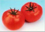 Tomato Outdoor Daniel