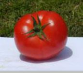 Tomato Outdoor Rosy