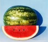 Watermelon Seeded Erol
